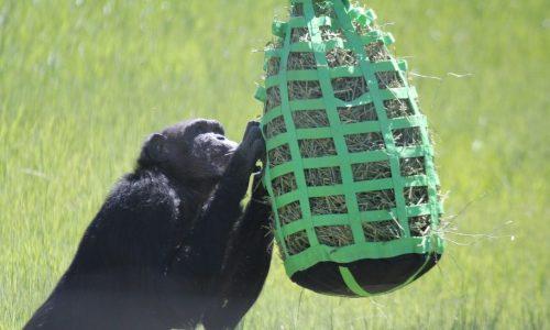 Hay feeder puzzle