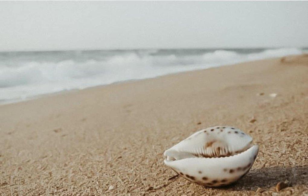 Das Leben in der Nähe des Meeres
