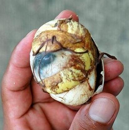embrione bollito