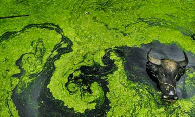 Impressive images of water pollution in China