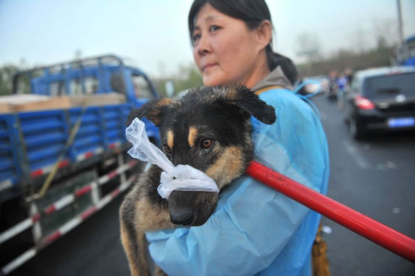 dogs freed in China