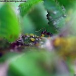 china-macro-insects-016