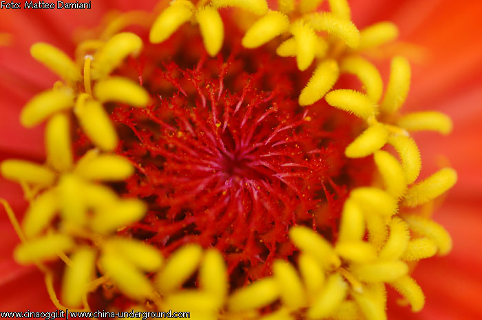 Images of Chinese flowers
