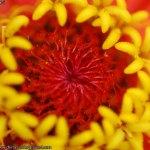 flor-de-mal-china-001