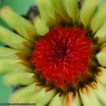 flor-de-mal-china-004