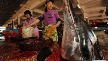 abuses against animals in Traditional Chinese Medicine