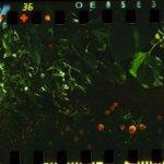 Spinner360 Sunflowers