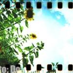 spinner_360_sunflowers_005