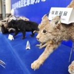 Forest rangers crack down on the largest wildlife animal trafficking in China