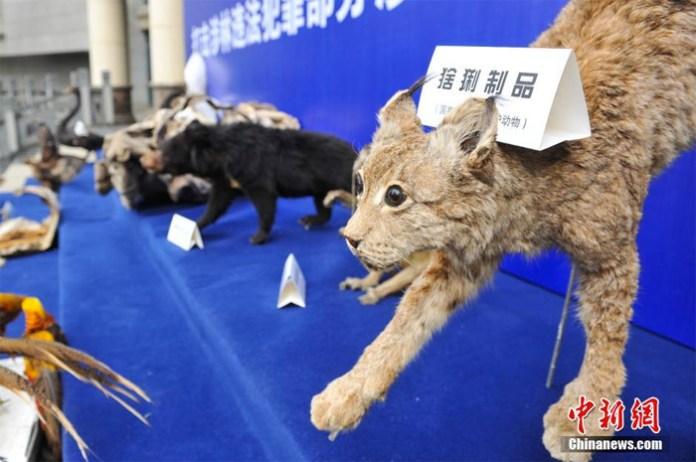 wildlife animal trafficking