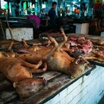 Yulind dog meat festival China