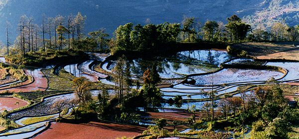 Yuanyang rice-paddy terracing