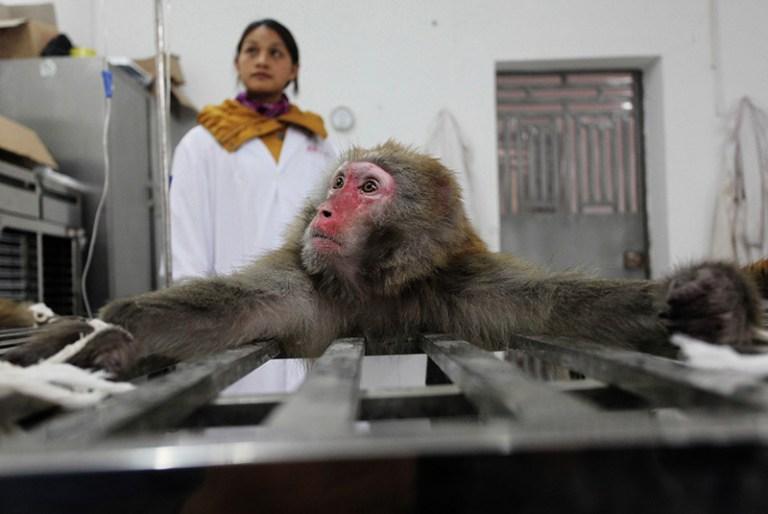 Research monkeys