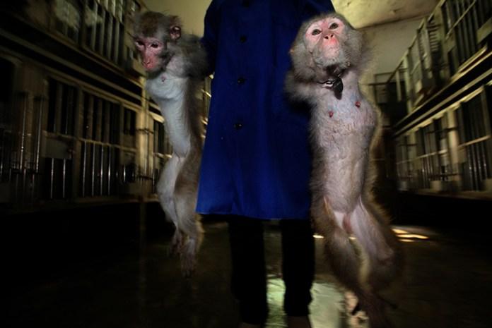 Li_Feng_China_Shortlist_Professional_Environment_2016_8-Research monkeys