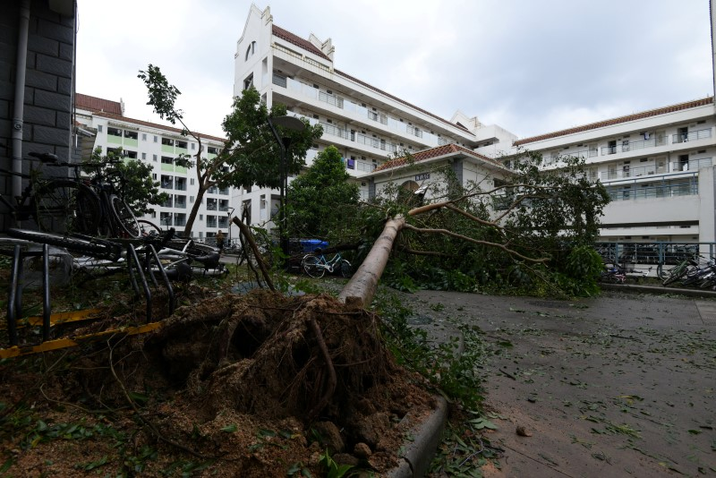 An uprooted tree is seen at a factory before Typhoon Meranti makes a landfall on southeastern China, in Quanzhou