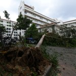 Uprooted trees are seen after Typhoon Meranti makes a landfall on southeastern China, in Xiamen