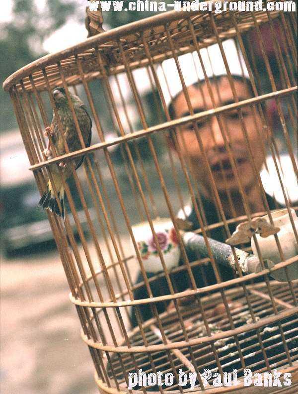 Birdman - Xi'An - Shaanxi