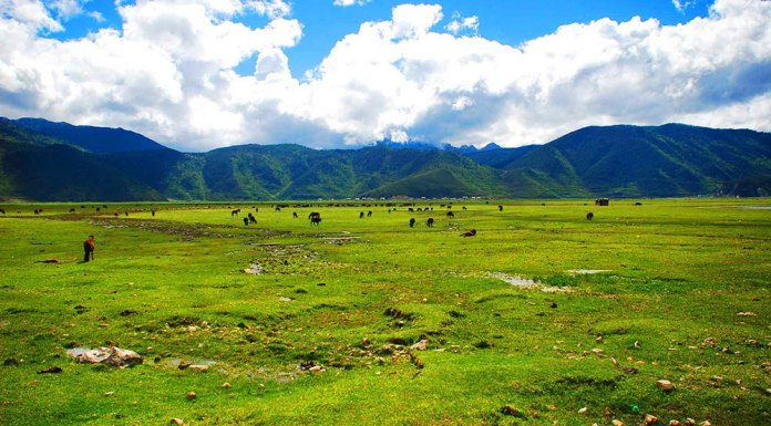 Lanyue Valley Scenic Region in Shangri-la