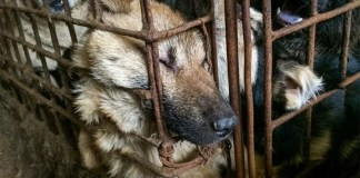 Dog meat banned at Yulin dog meat festival