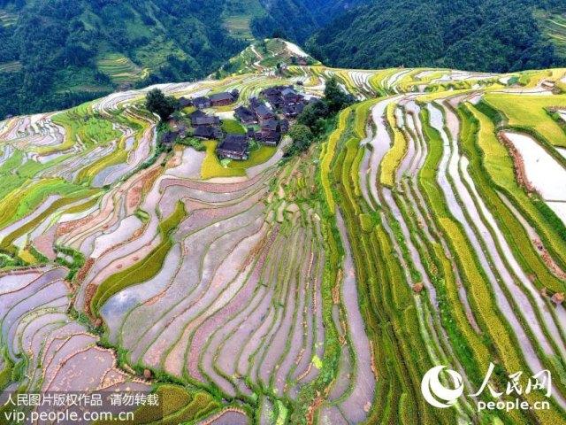 yueliang-terraces-rongjiang