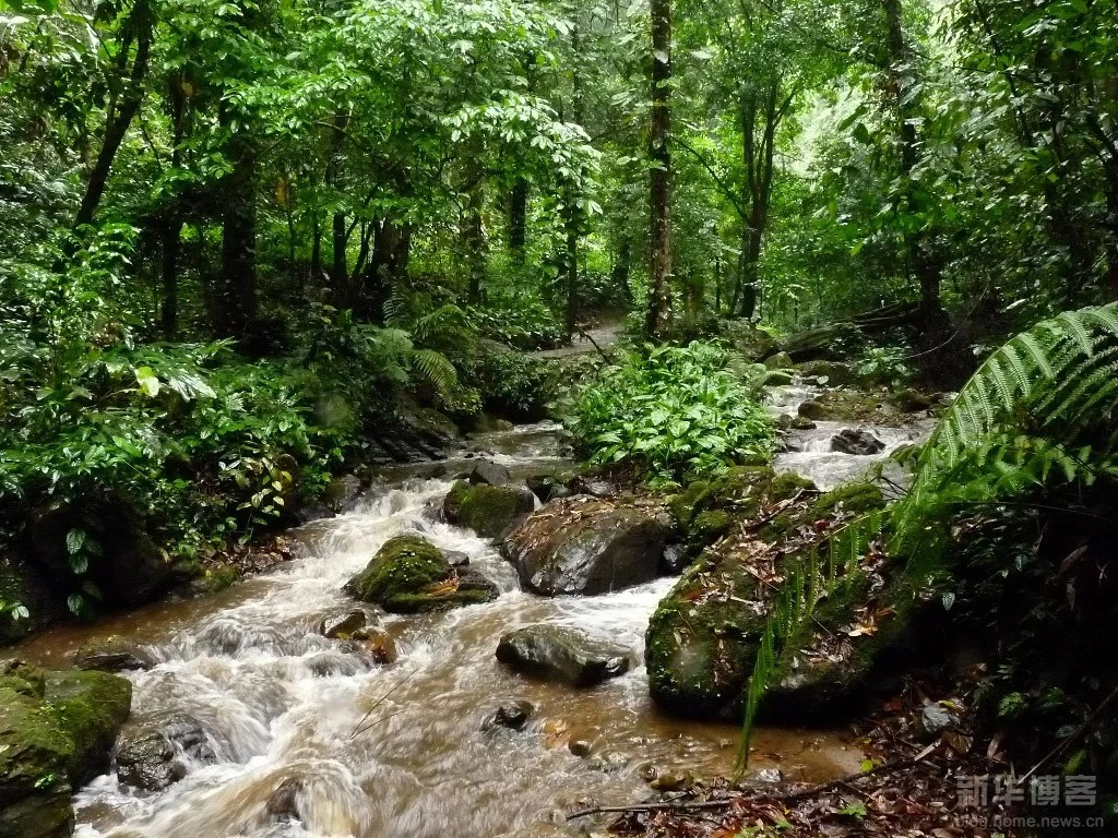 Moli-Tropical-Rainforest-China