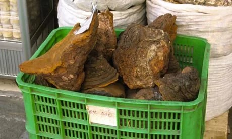 rhino horn trade