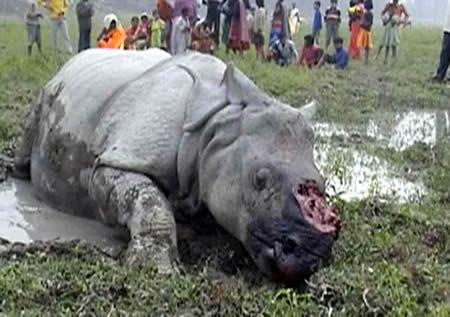 Rhinoceros Poaching
