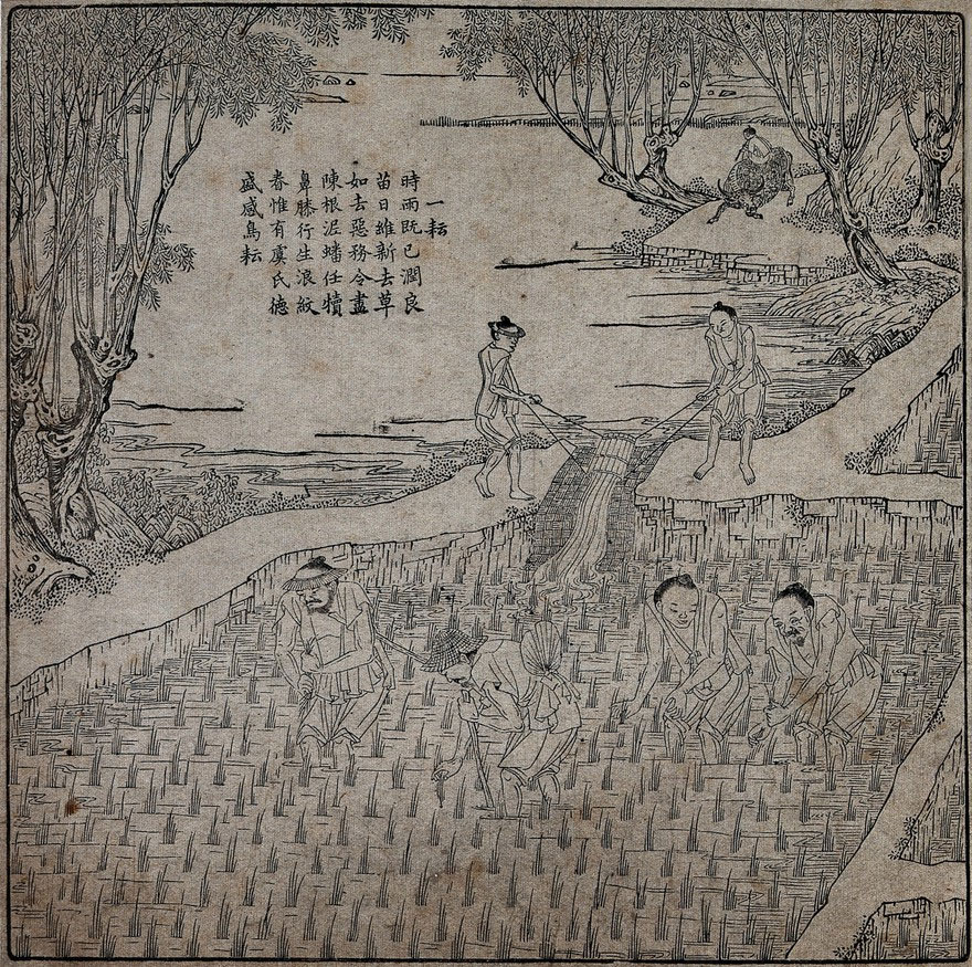 Rice cultivation: four men transplanting rice seedlings (?) in a paddy field, while behind them two men irrigate the field. Woodcut, 1696.