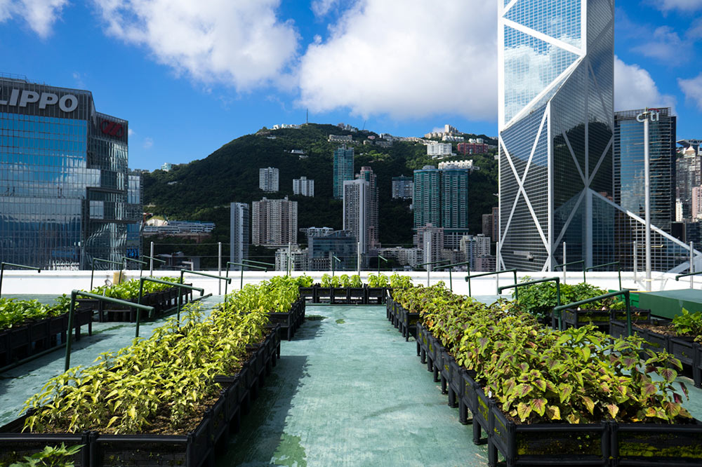 Rooftop-Farm-at-JLL-managed-building-in-Central_Photo-Credit-Rooftop-Republic_Sarah-Thrower