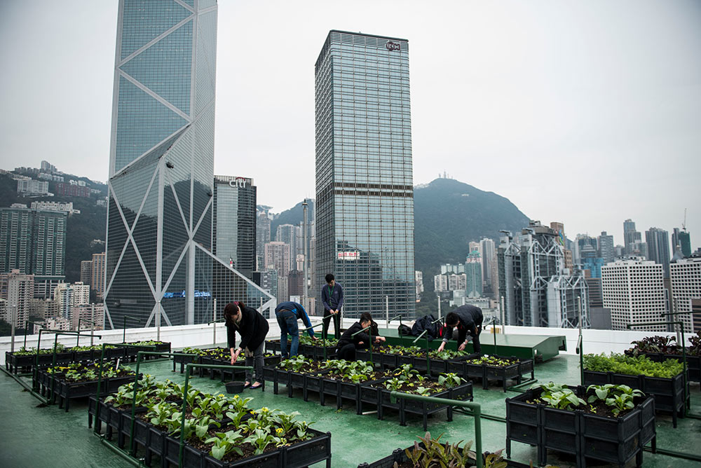 Rooftop-Farm-at-JLL-managed-building-in-Central_Photo-Credit-Rooftop-Republic_Xaume-Olleros
