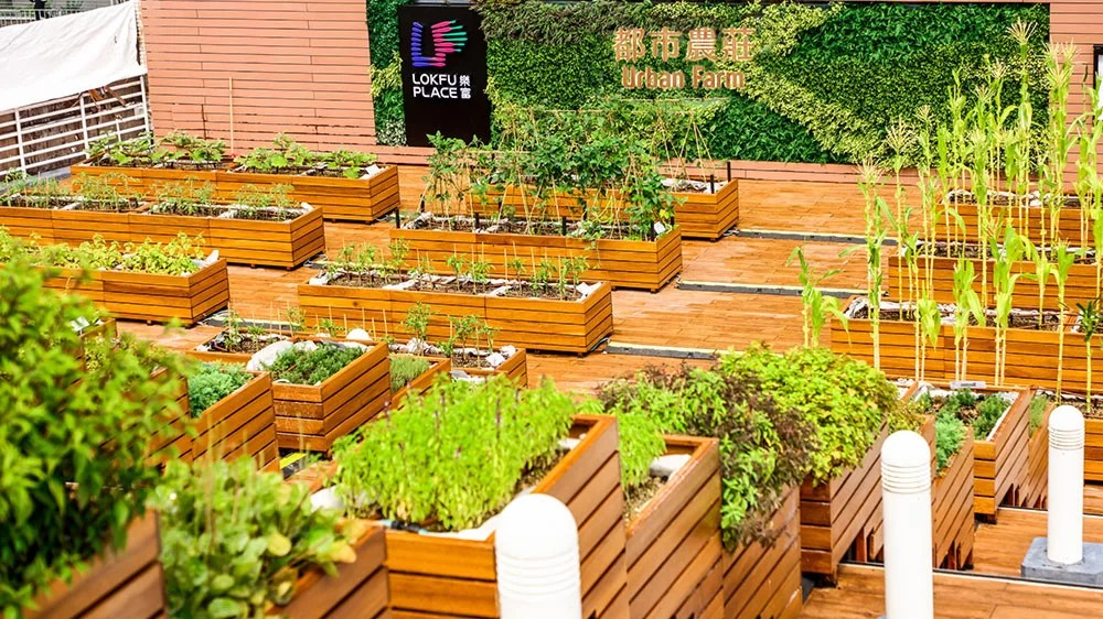 Rooftop-Republic_Lok-Fu-Urban-Farm_Photo-Credit-LINK