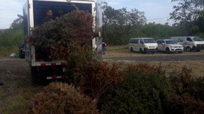通知:当局将设立指定地点以收集和处理圣诞树