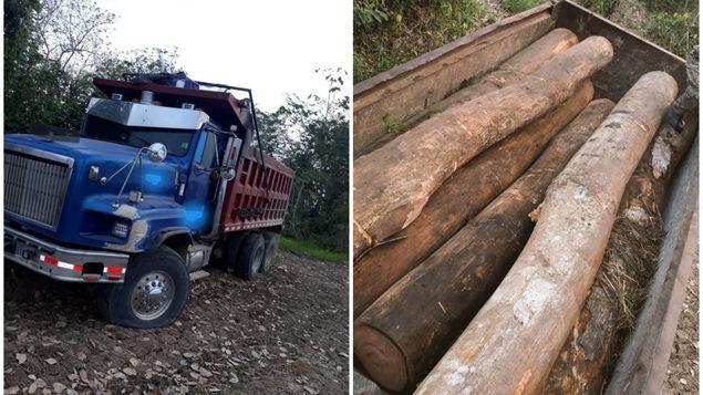 Darién省再发现非法砍伐树木 未逮捕涉案嫌疑人