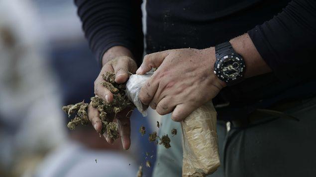巴拿马当局2018全年共摧毁66.6吨毒品