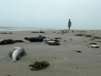 Mass-fish-death