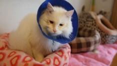 pet-adoption-cut-5-00_04_24_02-still004