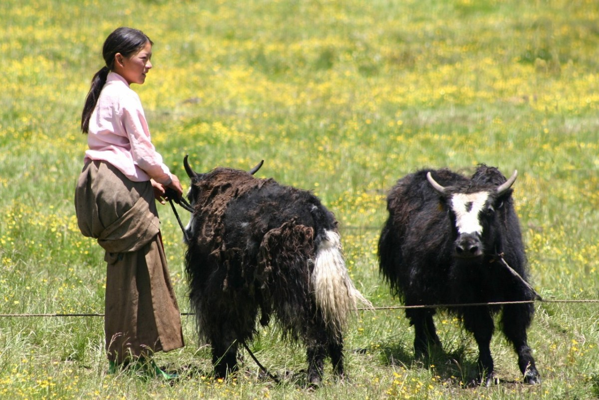 Yak herders via Yaks Matter, 2019. All rights reserved