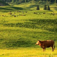Xinjiang Tangbula Prairie – A Beautiful Place for Holidaying and Trekking