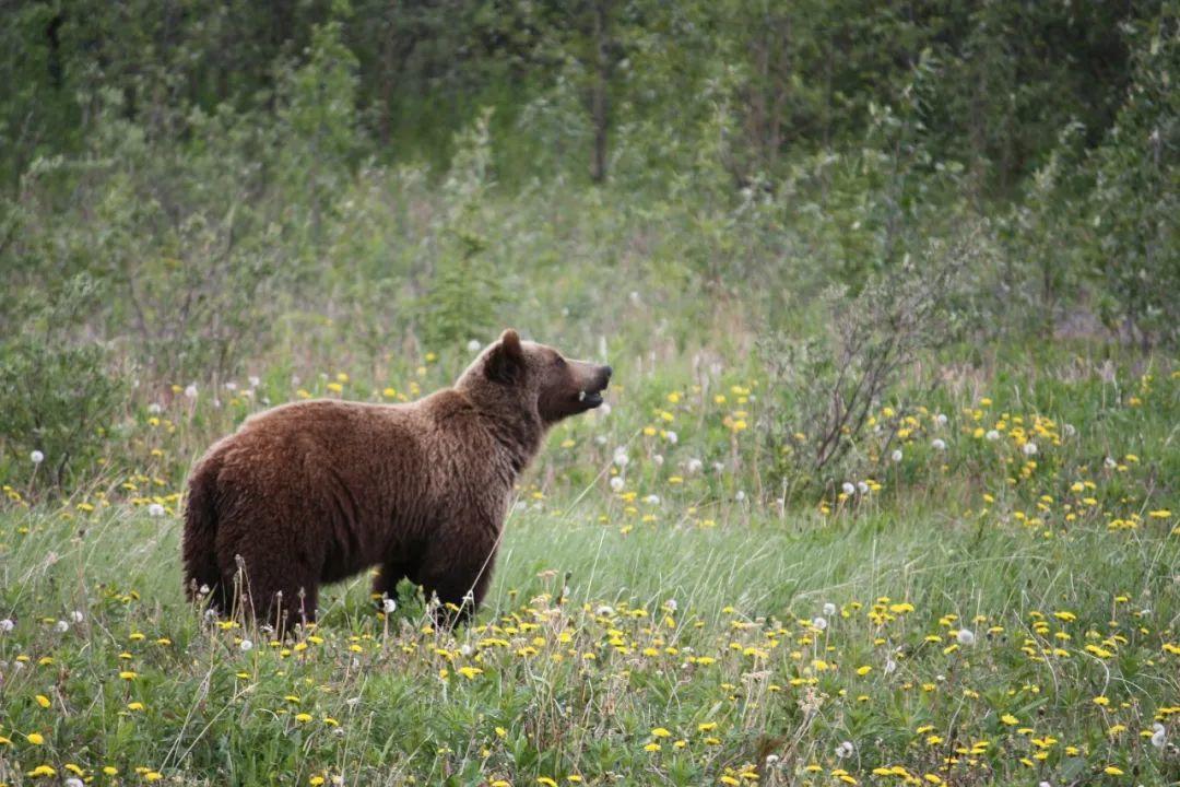老熊的春天来了——要向史上最长的牛市说bye-bye了吗?
