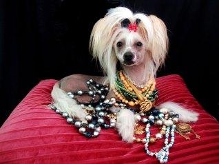 Kiki D Jewelry Model