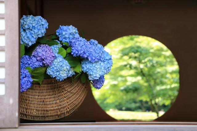 鎌倉明月院のあじさい 2021年の開花や見頃の時期は? 拝観料やアクセスも網羅
