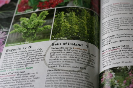 bells-of-ireland-in-catalog