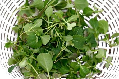 broccoli-thinning-salad