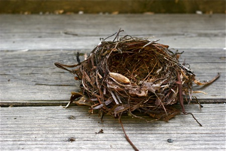 empty-bird-nest