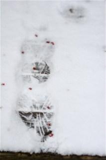 footprint-in-snow