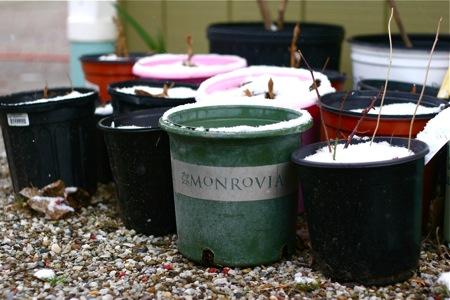 pots-in-snow
