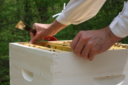 removing-frames-from-bee-hive