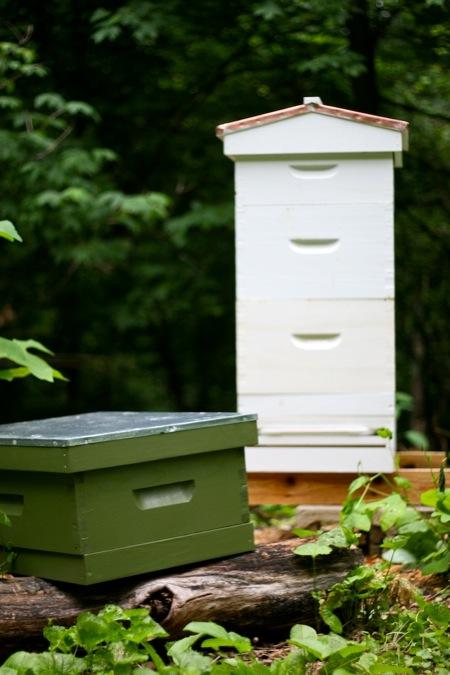 New_beehive