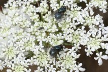 Insects_on_flower
