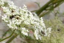 insect_on_flower_5
